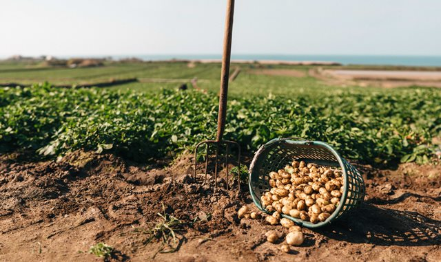 Genuine Jersey launches 11th Jersey Royal Potato Growing Competition